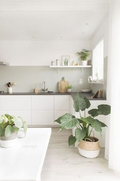 Minimal white kitchen with house plants and open shelves