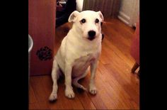 This Guilty Dog Has The Best Reaction When He's Confronted