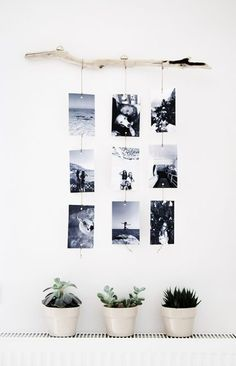 Rama de árbol para colgar fotos