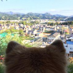 おはようございまーす♪☀️ Good morning!👍 プレミアム金曜日、そしてゴールデンウイーク直前の朝のおさんぽたいむing🐾 気持ち良い朝を迎えました。 頭の上では、いろいろな鳥がさえずっています📢 さぁ、明日から9連休の人もそうでない人も、今日1日元気に笑顔で頑張って生きましょうね!💪 Have a nice day!💕🤗 日本の反対側のみなさんは、 Have a nice dream.💕😴 #愛犬#ちばわん#保護犬#dog#mixdog#inu#犬#イヌ#いぬ#ペット#pet#ふわふわ#後頭部#後ろ姿#風景#空#sora#sky#イマソラ#お散歩#おさんぽ#散歩#武蔵五日市#Photo#あきる野市#写真