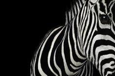 Stunning Close-Up Portraits of Wild Animals by Brad Wilson - My Modern Metropolis