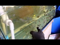 Self Cleaning Aquaponic Fish Rack filter - YouTube