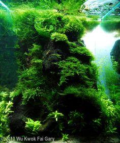 2010 AGA Aquascaping Contest - Entry #71