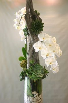Interesante combinación de orquídeas y suculentas sobre una rama o tronco