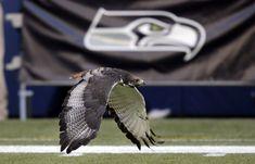 Seattle Seahawks - Taima