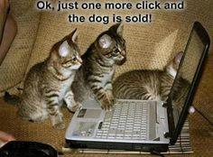 Kittens sell dog online!