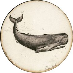 BY TATIANA GOMEZ ZAPATA #illustration #pencildrawing #drawing #whale #animalsart