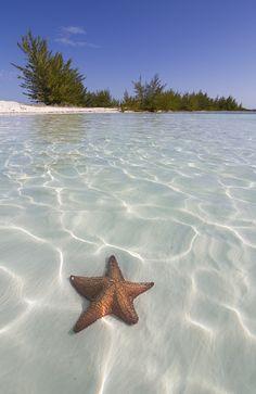 """socialfoto: """"Patrick Starfish by nivovic #SocialFoto """" Las playas cubanas son de las más limpias"""