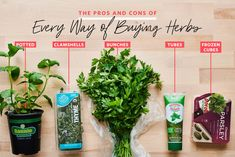 Graphic for showdown herbs Cooking Recipes For Dinner, Cooking Tips, Whole Food Recipes, Cooking For Beginners, Recipes For Beginners, Easy Recipes, Gourmet Garden, Basil Plant, Smart Nutrition