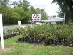 206 FARM MARKET