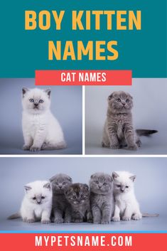 A good name sets the label for a boy cat's personality type, characteristics and temperament. It also helps to set them apart from other kittens. Check out our list of boy cat names that are unique and individualistic like your tomcat.  #boycatnames #catnames #malecatnames Male Cat Names Unique, Male Pet Names, Unique Cats, Cute Animal Names, Cute Cat Names, Cute Animals, Kitten Names Boy, Names Girl, Cute Little Boys