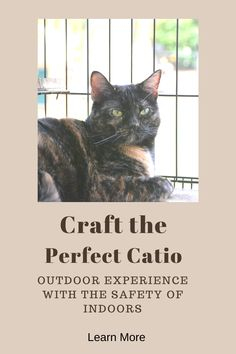 Does your cat yearn to go outside but you worry about him being safe? Consider a catio, an enclosed space that allows your cat to experience the outdoors safely. Learn tips and tricks to make the most of this space for you and your feline companion