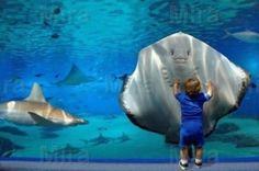 little boy and sting ray at aquarium ~