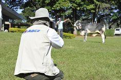 odo gado que participa da #ExpoZebu ou #ExpoGenética é vencedor