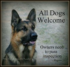 """The German Shepherd From your friends at phoenix dog in home dog training""""k9katelynn"""" see more about Scottsdale dog training at k9katelynn.com! Pinterest with over 20,200 followers! Google plus with over 138,000 views! You tube with over 500 videos and 60,000 views!! Serving the valley for 11 plus years"""