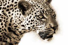 Supreme, Wildlife, Canvas, Animals, Decor, Tela, Animales, Decoration, Animaux