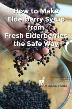 How To Make Elderberry Syrup From Fresh Elderberries The Safe ~ wie man holundersirup aus frischen holunderbeeren macht the safe ~ ~ elderberry recipes Ideas. Elderberry Juice, Elderberry Recipes, Elderberry Syrup Recipe Canning, Elderberry Varieties, Elderberry Powder, Elderberry Plant, Elderberry Benefits, Juicing Benefits, Natural Health Remedies