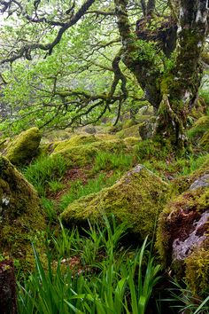 Wistman's Wood, Dartmoor National Park, Devon, UK Ancient woodland (deciduous native species) Foto Nature, All Nature, England And Scotland, Devon England, Devon Uk, South Devon, Oxford England, Cornwall England, Yorkshire England