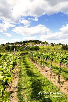 Nirgends gibt es so viele charmante Kellergassen wie im Weinviertel. Eine der schönsten befindet sich in Wildendürnbach, im nördlichen Weinviertel. Rund um den Galgenberg reihen sich auf drei Ebenen rund 185 weiß gekalkte Presshäuser, die zum Genießen & Verweilen einladen. Besonders empfehlenswert ist in den Sommermonaten ein Besuch der offenen Kellertüren. Umgeben von idyllischen Weingärten lassen sich regionale Schmankerl und Weine besonders gut genießen. © Weinviertel Tourismus Austria, Vineyard, Holiday, Outdoor, Landscape Photography, Tourism, Paisajes, Road Trip Destinations, Round Round