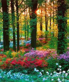 Oh to walk through the wooded glen with flowers sweet and daylight strong...