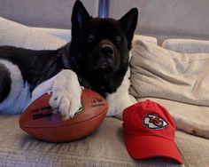 "Seems like a certain puppy boy is very much an AFC fan...lol!! ;) Henry Cavill (@henrycavill) on Instagram: ""Ready for the game. Go Chiefs! #ChiefsKingdom #ChiefsBear @Chiefs"""