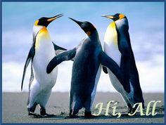 Adorable Photos of Penguins - AmO Images - AmO Images Wallpaper Wallpapers, Sc Freiburg, Thinking Day, Mundo Animal, Ticket, Cute Animals, Arctic Animals, Happy Animals, Penguin