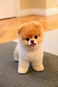 Adorable Dogs That Are Raising Money for Others 5 Cutest Teacup puppies you have ever seen// In need of a detox? off using our discount code at Cutest Teacup puppies you have ever seen// In need of a detox? off using our discount code Baby Animals Super Cute, Cute Little Animals, Cute Funny Animals, Cute Cats, Adorable Dogs, Funny Dogs, Cutest Dogs, Scary Dogs, Cutest Puppy Ever