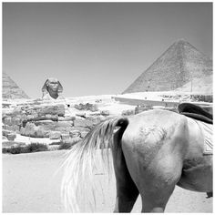 Egypt, 1959. Photo Vivian Maier