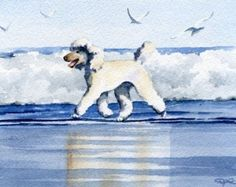 WHITE POODLE Art Print Watercolor Signed by by k9artgallery