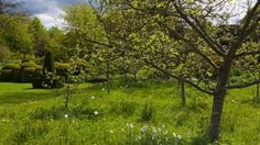 National Trust site for places to visit and things to do in Yorkshire - Nunnington Hall Garden