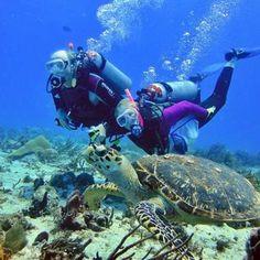 underwater adventures Cozumel Diving, Kids Corner, Under The Sea, Underwater, Activities For Kids, Explore, Adventure, Beach, Life
