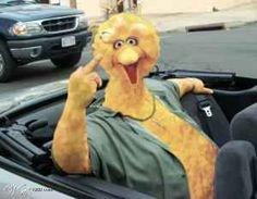 BIG BIRD FLIP OFF - Photo - Shoptaugh Web Site - MyHeritage