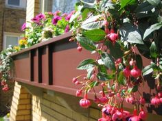 Bringing the window boxes back to Chicago's bungalows.