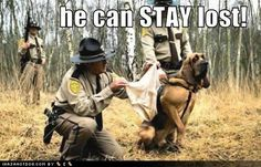 b7f8ae48_Funny-Dog-picture-with-caption-he-can-stay-lost.jpg
