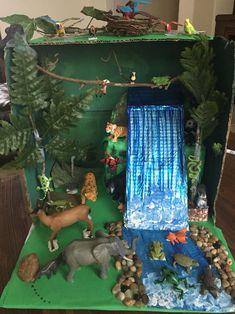Photos of rainforest diorama school projects et - experimento como hacer un ecosistema animals