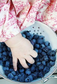 Blueberry Pickin' Time