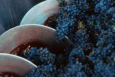 Spier Wine Estate Wine Recipes, South Africa, Vineyard, Cape, Food, Mantle, Cabo, Vine Yard, Essen