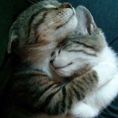 Cozy together!