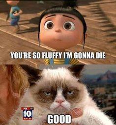 Grumpy Cat... so fluffy
