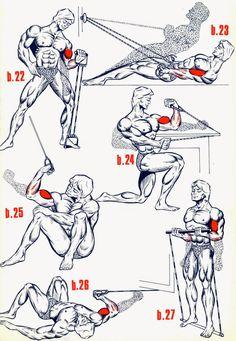 Comment Muscler chaque partie du corps : Explication Par Image