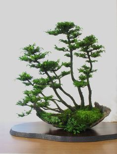 """There are no borders in bonsai. The dove of peace flies to palace as to humble house, to young as to old, to rich and poor. So does the spirit of bonsai. Ikebana, Bonsai Forest, Bonsai Garden, Bonsai Trees, Succulents Garden, Plantas Bonsai, Bonsai Plante, Miniature Trees, Arte Floral"
