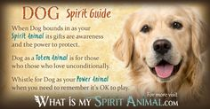 The most in-depth Dog Symbolism & Dog Meanings! Dog as a Spirit, Totem, & Power Animal. Plus, Dog in Celtic & Native American Symbols and Dog Dreams, too! Spirit Animal Quiz, Whats Your Spirit Animal, Spirit Animal Totem, Animal Spirit Guides, Animal Totems, Animal Meanings, Animal Symbolism, Animal Reiki, Native American Symbols