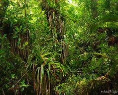 Jungle flora from Cusuco National Park, Honduras, Central America. Central America, Flora, National Parks, Organic, Honduras, Nature, Plants, Landscapes, Mood