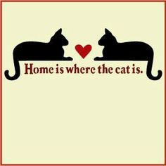Home is where the cat is <3