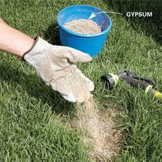 Neutralize dog spots  Gypsum and water are the antidote for dog spots in your yard.