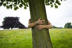 Do You Know the Right Way to Hug a Tree?: Do You Know How to Hug a Tree?