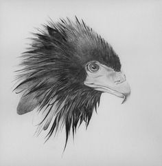 Black Bird Print Pencil Drawing showing the by Appearance1 on Etsy, $15.00