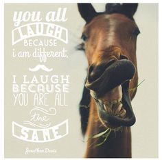 Live, love, laugh and rude horses Funny Horses, Cute Horses, Horse Love, Beautiful Horses, Cowgirl And Horse, Horse Girl, Equestrian Quotes, All About Horses, Horse Quotes