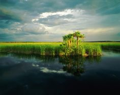 """Writer Marjory Stoneman Douglas popularized the term """"River of Grass"""" to describe the sawgrass marshes, part of a complex system of interdependent ecosystems that include cypress swamps, the estuarine mangrove forests of the Ten Thousand Islands, tropical hardwood hammocks, pine rockland, and the marine environment of Florida Bay."""