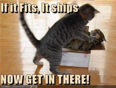 My cats would like to do that to each other!  They are not friends!